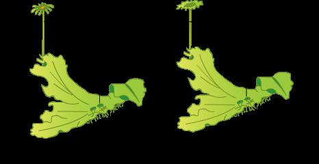 Pteridophyta diagram