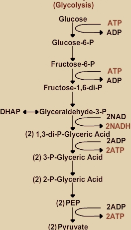 schematic representation of glycolysis with Schematic Representation Of Glycolysis on Schematic Diagram Of Relay Module besides Schematic Representation Of Glycolysis moreover Detailedresult php likewise Full as well Mito Id Extracellular O2 Sensor Kit High Sensitivity.