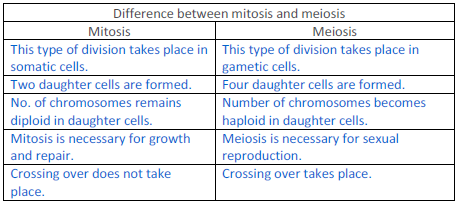 differences between meiosis and mitosis Difference between mitosis and meiosis (mitosis vs meiosis) biology exams 4 u biology exam preparation portal preparing with u 4 ur exams home about.
