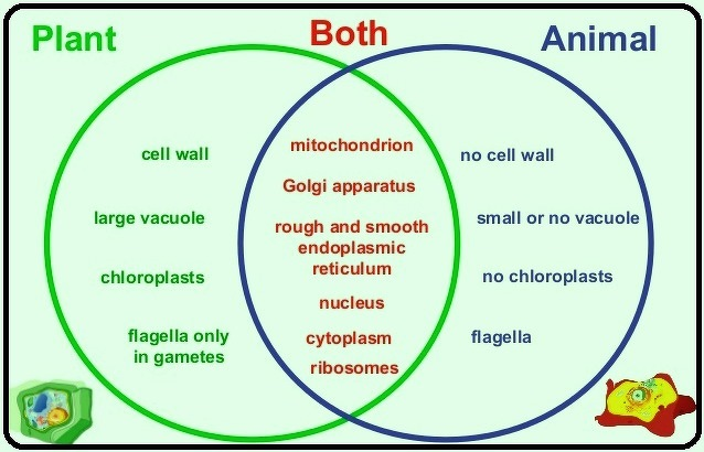 a venn diagram on plant and animal cell | Meritnation.com