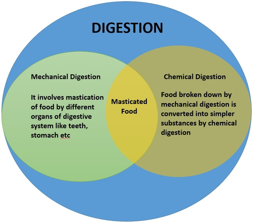 Compare and contrast mechanical and chemical digestion on a venn hope this information will clear your doubts about the topic if you have any more doubts just ask here on the forum and our experts will try to help you ccuart Image collections