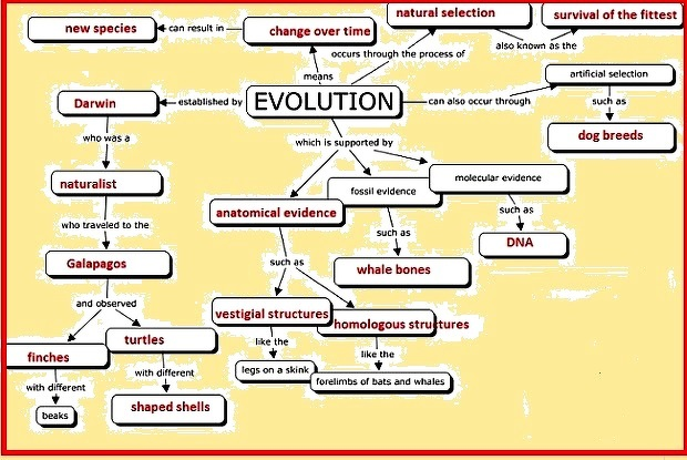 Concept Map About Evolution.Make A Concept Map On Evolution Science Heredity And Evolution