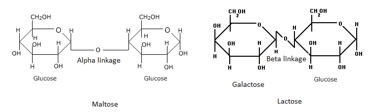 What is the difference between alpha glycosidic linkage and beta if the two monosaccharides are linked through two oh groups from the opposite side with the elimination of water its beta glycosidic linkage ex lactose ccuart Image collections