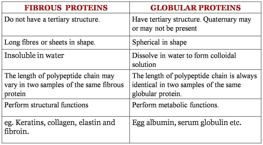 differentiate between :- globular protien and fibrous protien