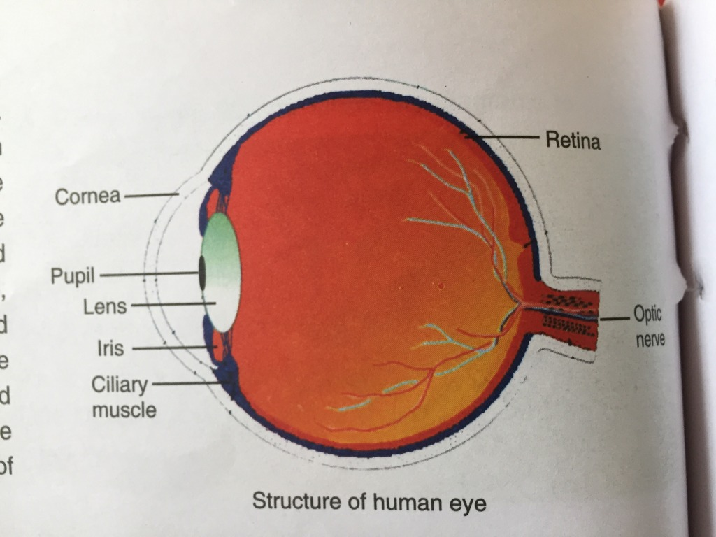 Draw a labeled diagram of human eye write the functions of cornea hope you all find this diagram helpful please a lots of sweet smile faces good luck pooptronica Image collections