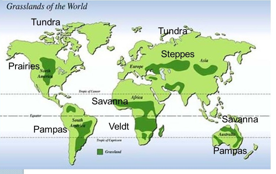 Savanna Biome World Map.On A Blank White Coloured Outline Map Of World Locate The