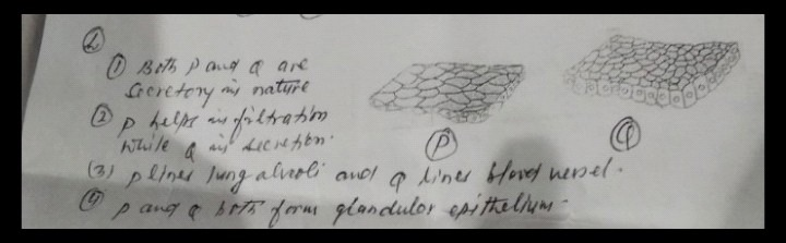 Draw a neat diagram of digestive system of frog 6296732 ans fast experts kl test hai ans samjh nhii aa rha hai ccuart Images