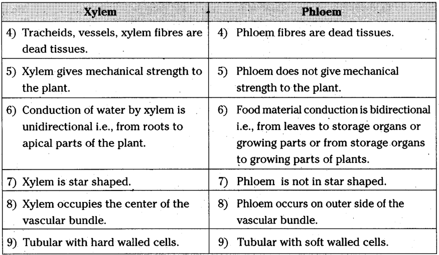 Difference Between Xylem And Phloem Under Microscope ...