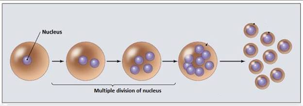 Define Multiple Fission Give some examples , who reproduce ...