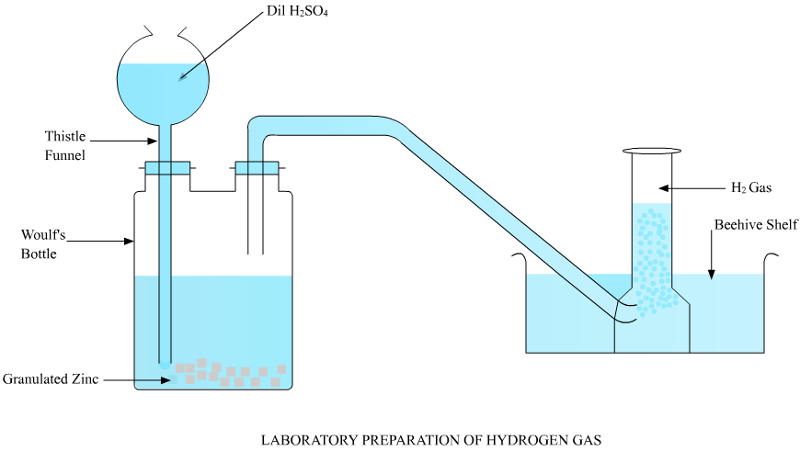 prove experimentally with the help of diagram that hydrogen gas is evolved  when metals react with dilute acids - science - acids bases and salts -  7844321