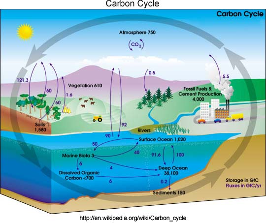 Can You Please Explain The Nitrogen Cycle And Carbon Cycle