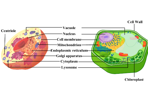 cell(2)