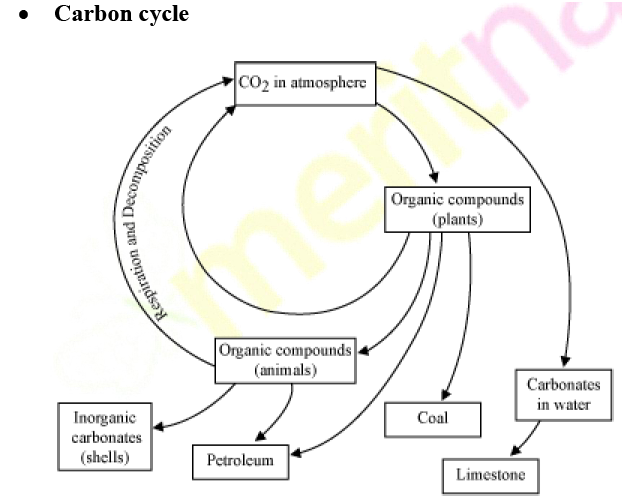 Explain the carbon cycle with the help of a diagram science diagram ccuart
