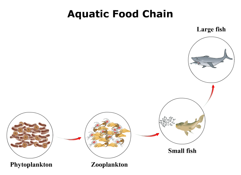 Grassland Example Food Chain