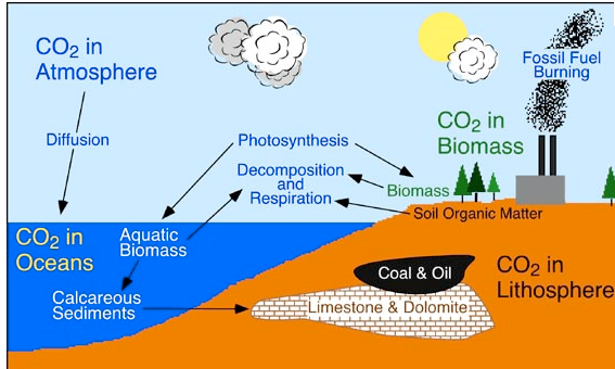 Explain the carbon cycle with the help of a diagram science all organisms do not need oxygen to break down glucose and produce energy the organisms which survive in the absence of oxygen are called anaerobes ccuart Choice Image