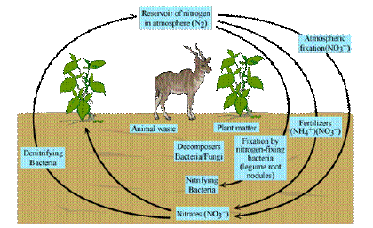 what is nitrogen fixation how is it carried out in nature ...